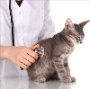 Ветеринарные клиники в Шахтах